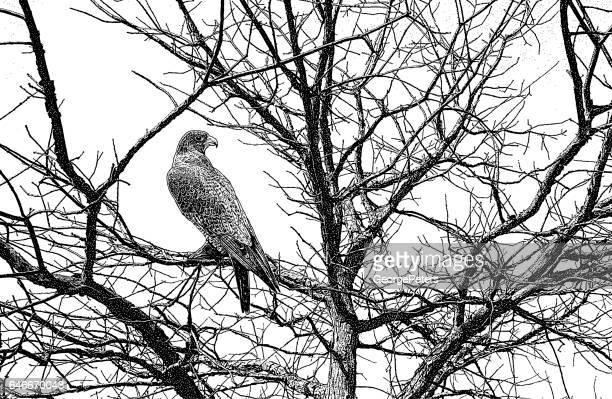 peregrine falcon perched in tree - falcons stock illustrations, clip art, cartoons, & icons