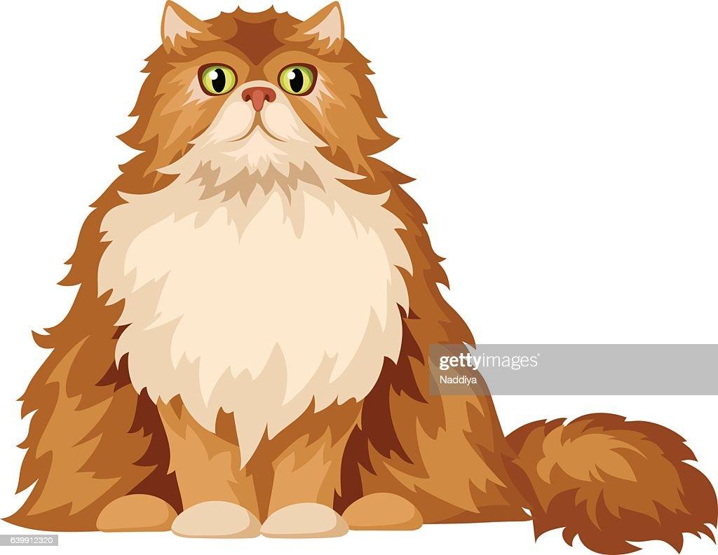 Persian cat. Vector illustration.