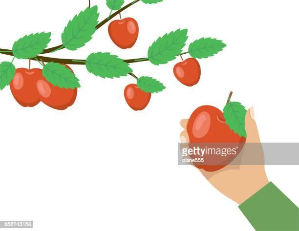 秋りんご摘み人。