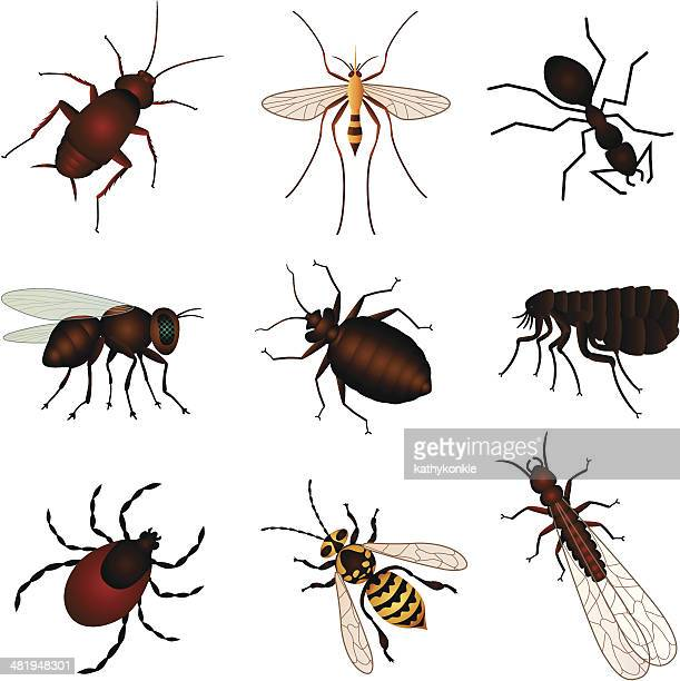 pest insects - insect stock illustrations