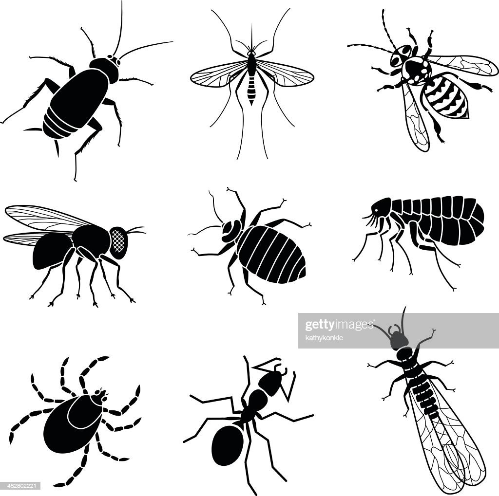 pest insects