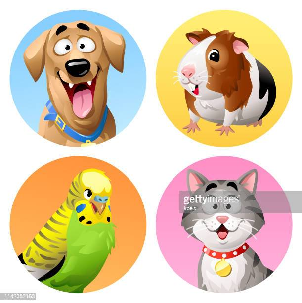 pet icons- cat, dog, budgie and guinea pig - avatar stock illustrations