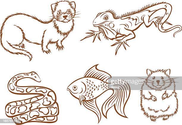 ilustraciones, imágenes clip art, dibujos animados e iconos de stock de pet shop animales - iguana
