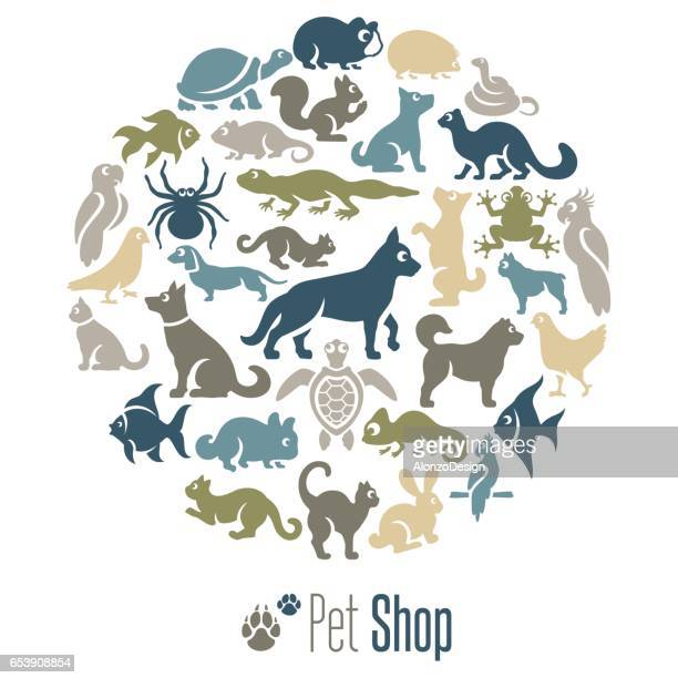 pet shop collage - chameleon stock illustrations, clip art, cartoons, & icons