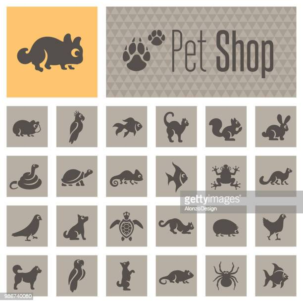 pet shop icons - chameleon stock illustrations, clip art, cartoons, & icons