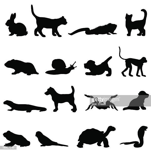 Pet silhouette collection profiles