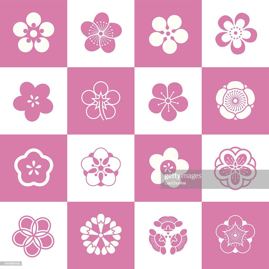 Petal patterns of plum blossom