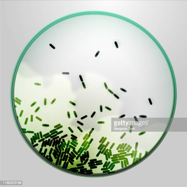 petri dish with agar and bacteria - microbiology stock illustrations