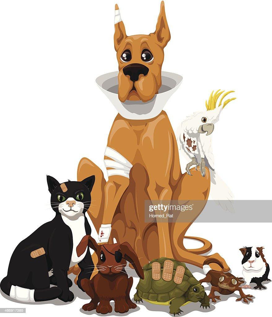 Se permiten mascotas-del veterinario : Ilustración de stock