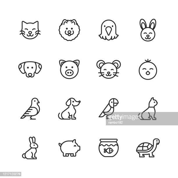 ilustrações, clipart, desenhos animados e ícones de ícones da linha pets. curso editável. pixel perfeito. para mobile e web. contém ícones como gato, gatinho, cachorro, cachorrinho, águia, pássaro, coelho, coelho, rato, pintinho, peixe dourado, porco, tartaruga. - animal