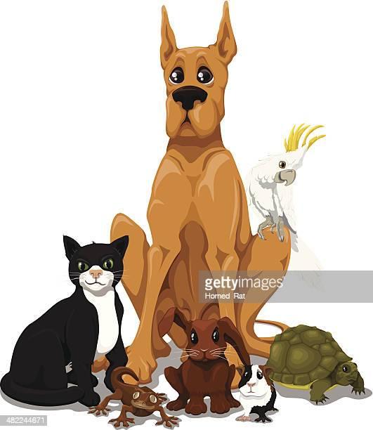 ilustraciones, imágenes clip art, dibujos animados e iconos de stock de se permiten mascotas - un animal