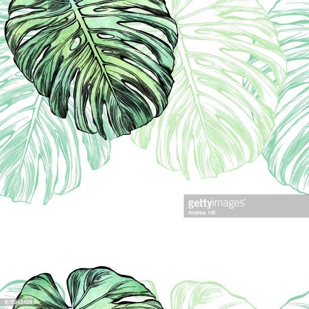 illustrations, cliparts, dessins animés et icônes de feuille de philodendron à l'aquarelle et encre isolée on white - plante verte