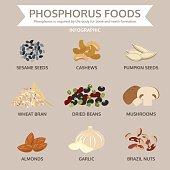 phosphorus foods, food info graphic, vector