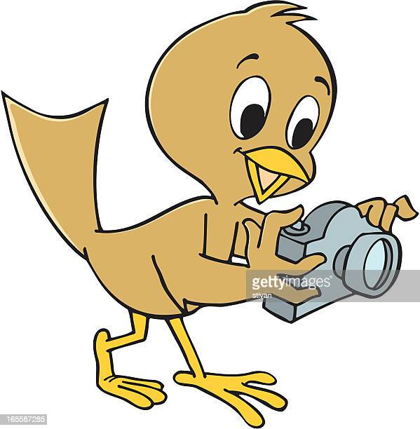 photographer bird - mockingbird stock illustrations, clip art, cartoons, & icons