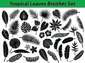 pical Exotic Leaves Silhouette Collection with some flowers in black color