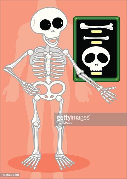 ilustraciones, imágenes clip art, dibujos animados e iconos de stock de elija un hueso - femur
