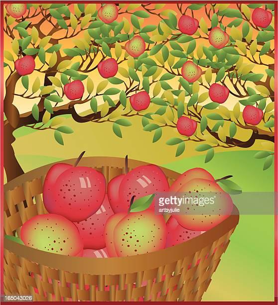 摘むリンゴ