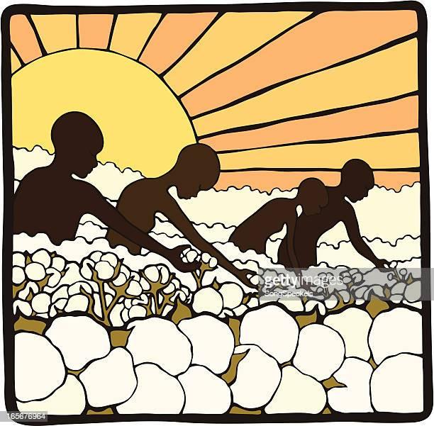 picking cotton - cotton stock illustrations, clip art, cartoons, & icons