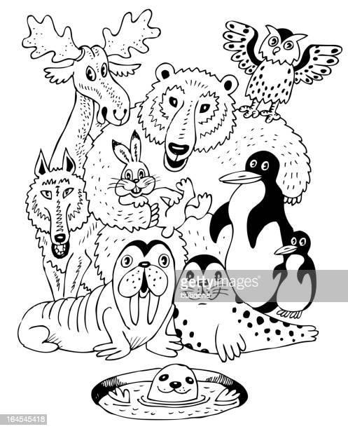 Ilustraciones de Stock y dibujos de Foca Leopardo | Getty Images