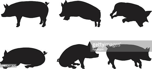 pig silhouette collection - pig stock illustrations