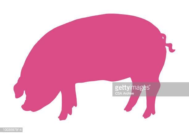 pig - pig stock illustrations
