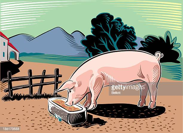 pig - pigs trough stock illustrations