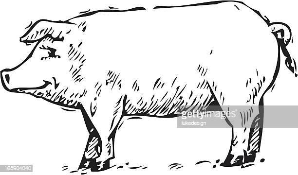 pig - x rated stock illustrations, clip art, cartoons, & icons