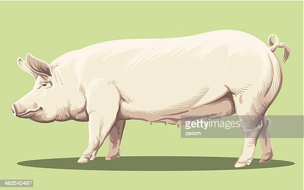 豚のロースト - 突き出た鼻点のイラスト素材/クリップアート素材/マンガ素材/アイコン素材