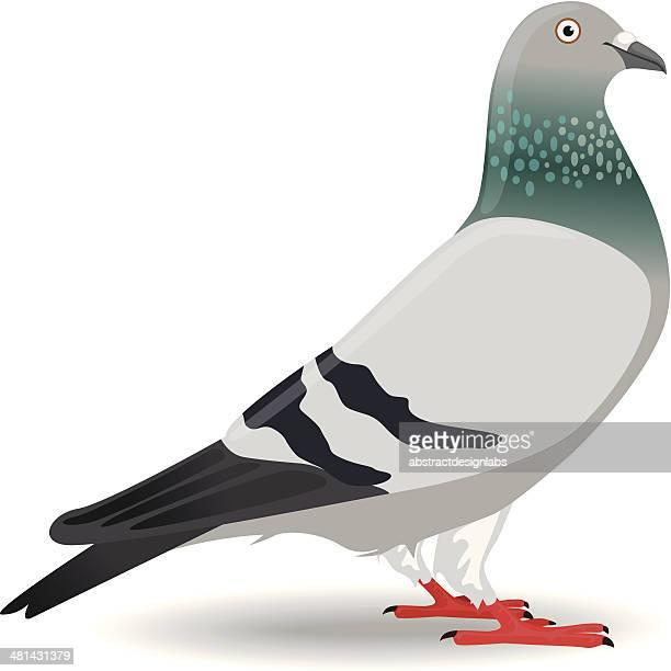 ilustraciones, imágenes clip art, dibujos animados e iconos de stock de paloma o dove - paloma blanca