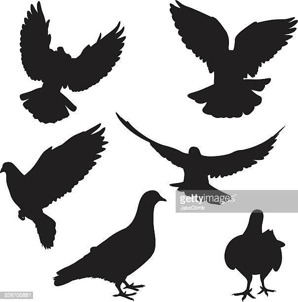 ilustraciones, imágenes clip art, dibujos animados e iconos de stock de pigeon siluetas - paloma blanca