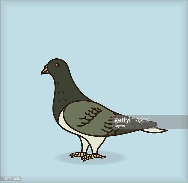 pigeon - pigeon stock illustrations