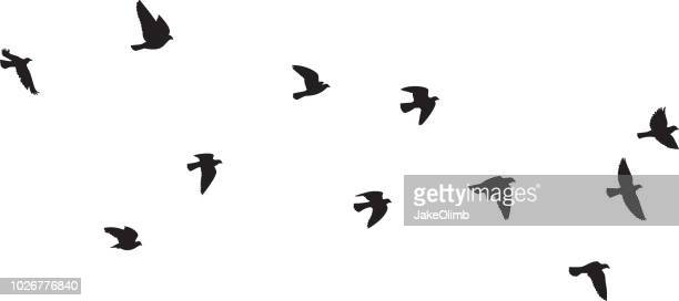pigeons flying silhouettes 1 - animal mouth stock illustrations