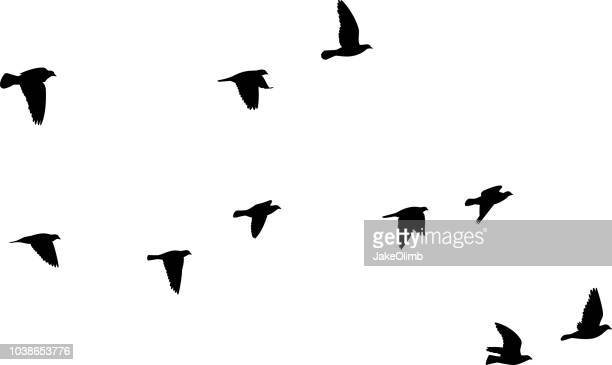 pigeons flying silhouettes 2 - flying stock illustrations