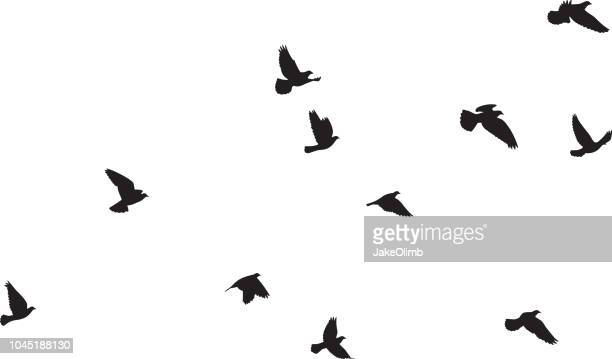 pigeons flying silhouettes 3 - dove bird stock illustrations