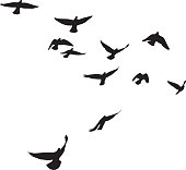 Pigeons Flying Silhouettes 4