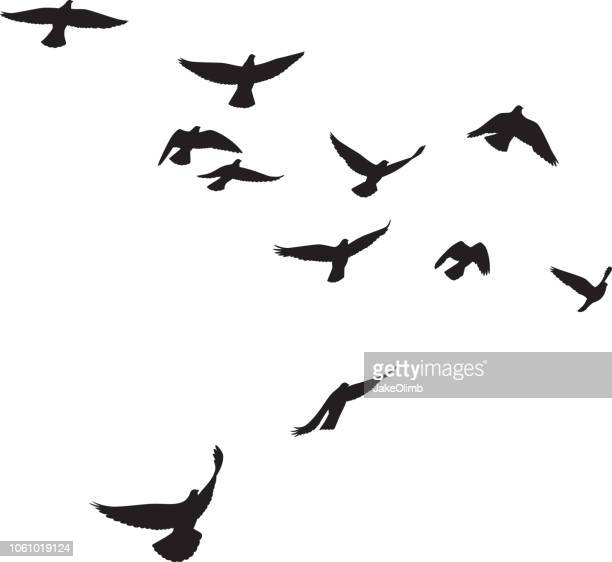 pigeons flying silhouettes 4 - flying stock illustrations