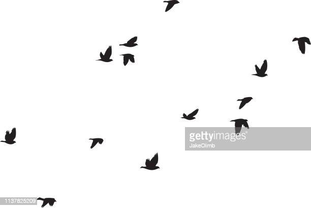 pigeons flying silhouettes 6 - flying stock illustrations