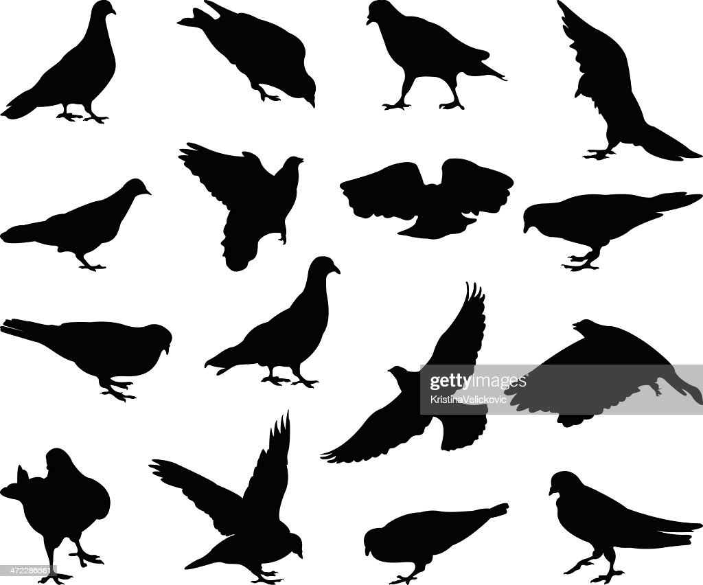 pigeons silhouette