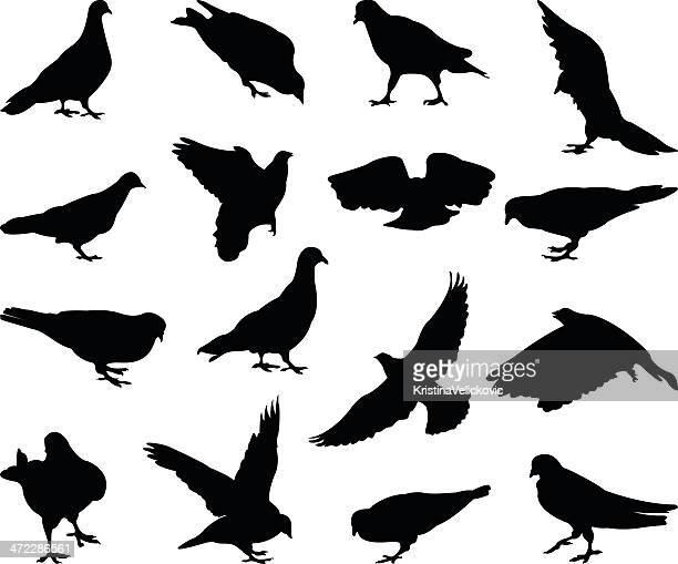 illustrations, cliparts, dessins animés et icônes de silhouette les pigeons - colombe