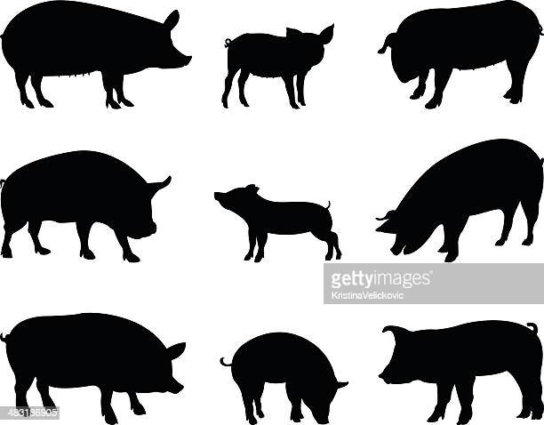 pigs silhouette - pig stock illustrations