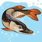 Pike underwater, vector illustration