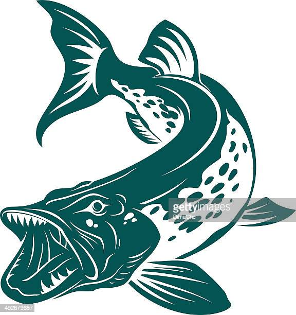 pike - tail fin stock illustrations, clip art, cartoons, & icons