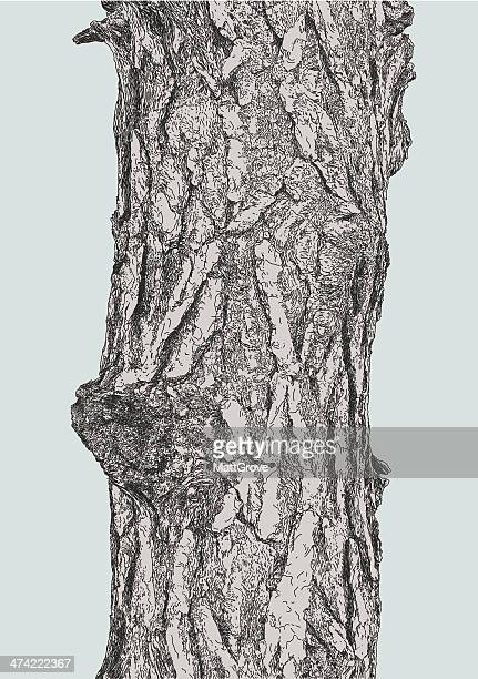 pine bark - tree trunk stock illustrations, clip art, cartoons, & icons