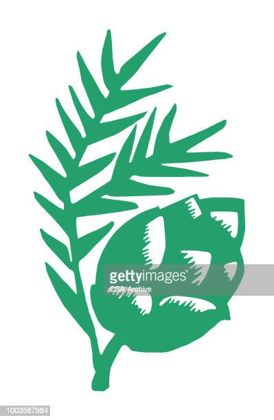 pine cone and branch - pine cone stock illustrations, clip art, cartoons, & icons