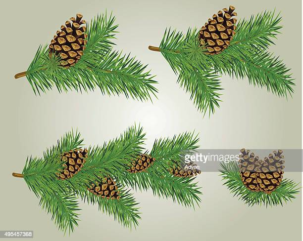 pine cone on fir branch - pine cone stock illustrations, clip art, cartoons, & icons