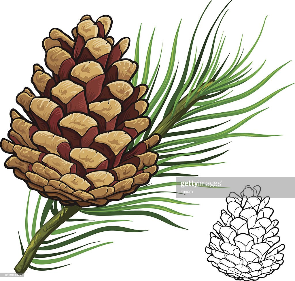 Pine Cone Illustration Pine Cone Vector Art |...