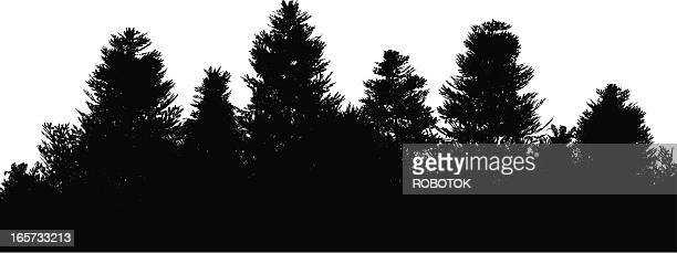 pine forest - grove stock illustrations, clip art, cartoons, & icons
