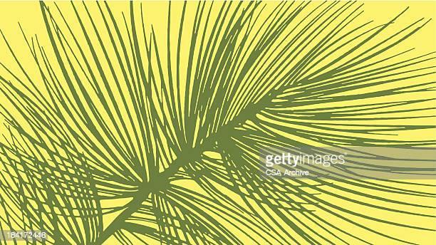 pine tree needles - pine wood material stock illustrations, clip art, cartoons, & icons