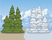 Pine Tree Seasons