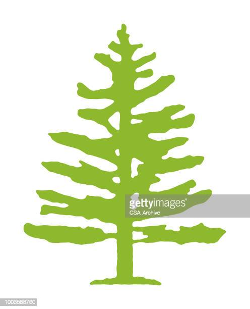 pine tree - wilderness stock illustrations